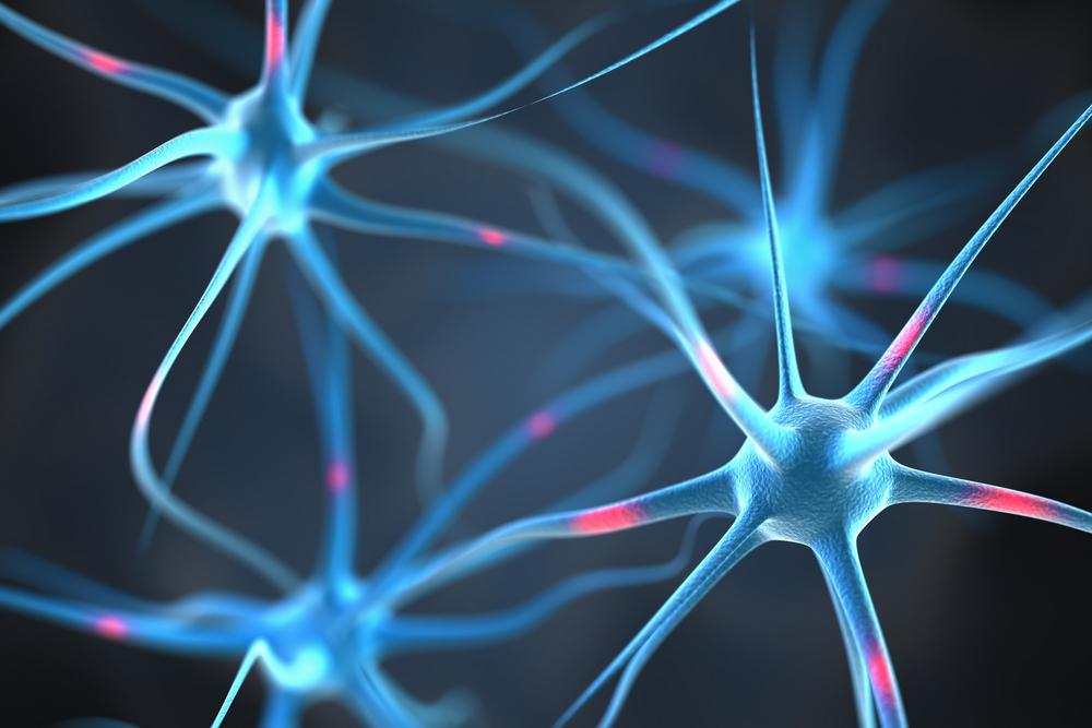 רשת ניורונים מוח
